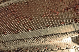 """<div class=""""bildunterschrift_en"""">Exposed ceiling beam provided with corrosion protection and completed reinforcement</div>"""